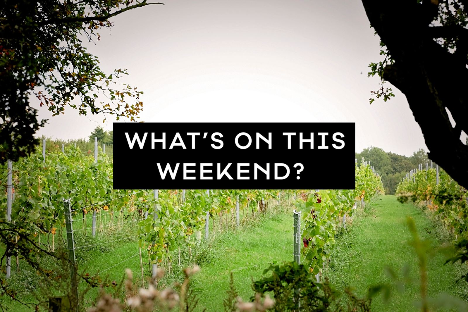 What's On This Weekend?