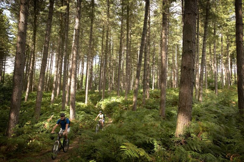 Sherwood Pines | Visit Nottinghamshire