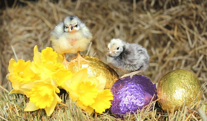 Easter Events Visit Nottinghamshire