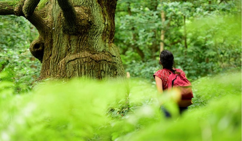 Forest Bathing at Sherwood Forest