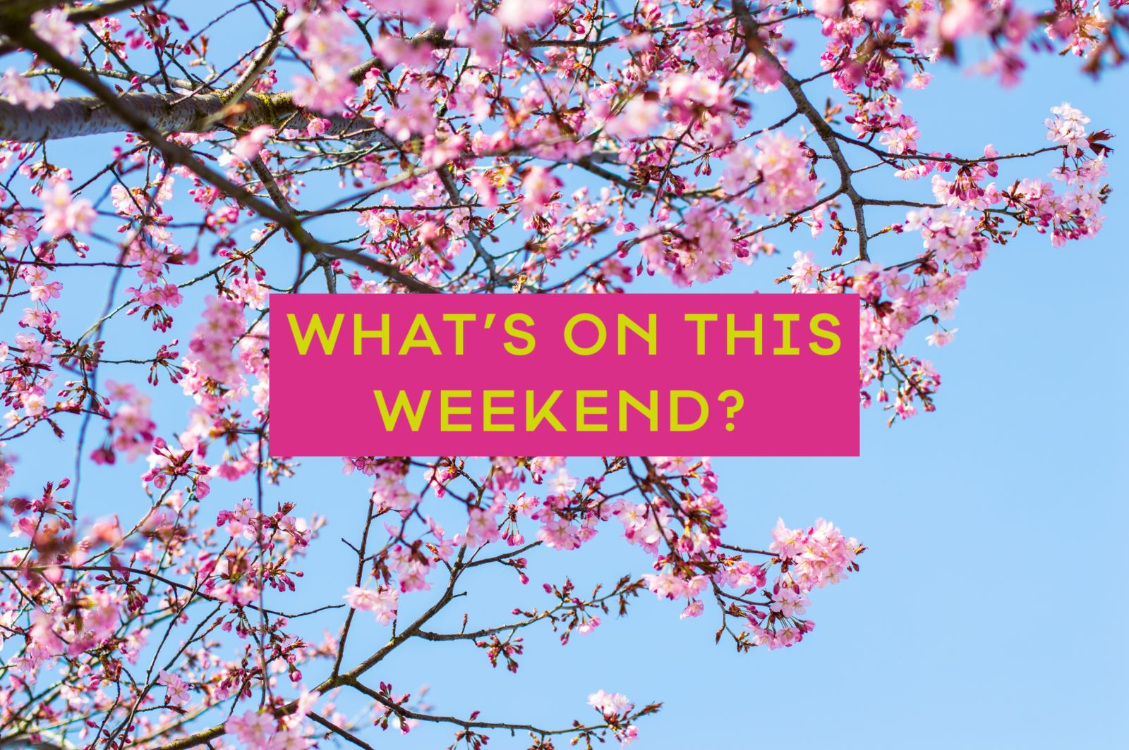 What's On This Weekend in Nottingham | Visit Nottinghamshire
