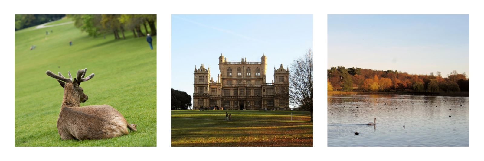 Wollaton Hall in Autumn