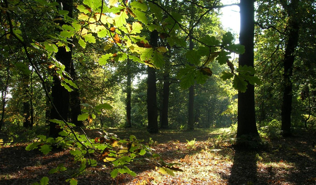 Sherwood Forest England Travel Guide