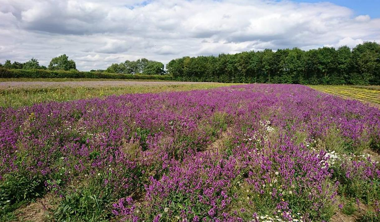 naturescape wildflower farm visit nottinghamshire