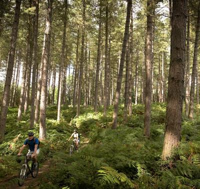 Sherwood Pines Mountain Bike Cycle Trails
