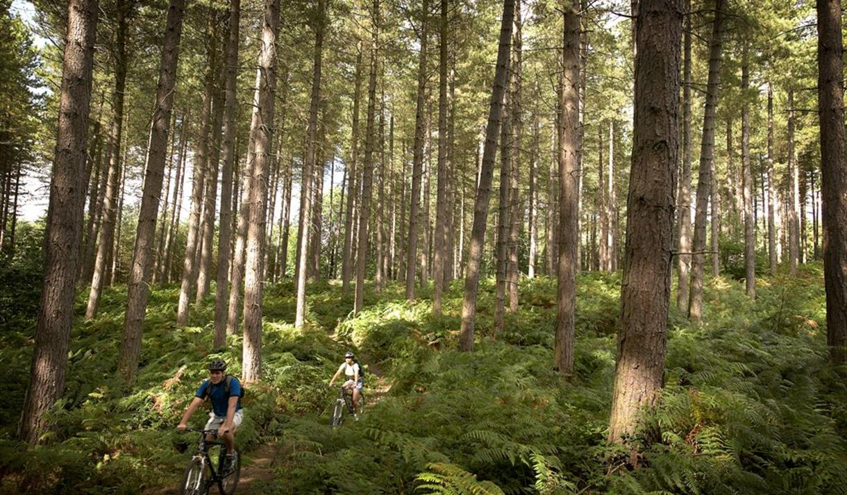 Sherwood Pines Mountain Bike Cycle Trails Cycle Route Visit