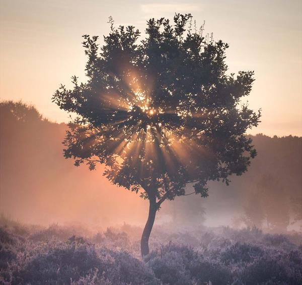 Photographer Chris Dale On Exploring Sherwood Forest