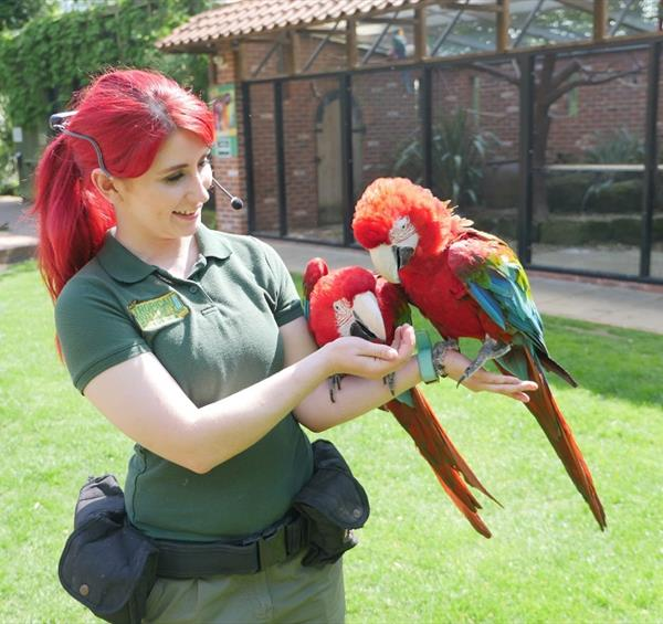 Celebrating 25 Years of Amazing Animal Encouters at Tropical Butterfly House, Wildlife and Falconry Centre.