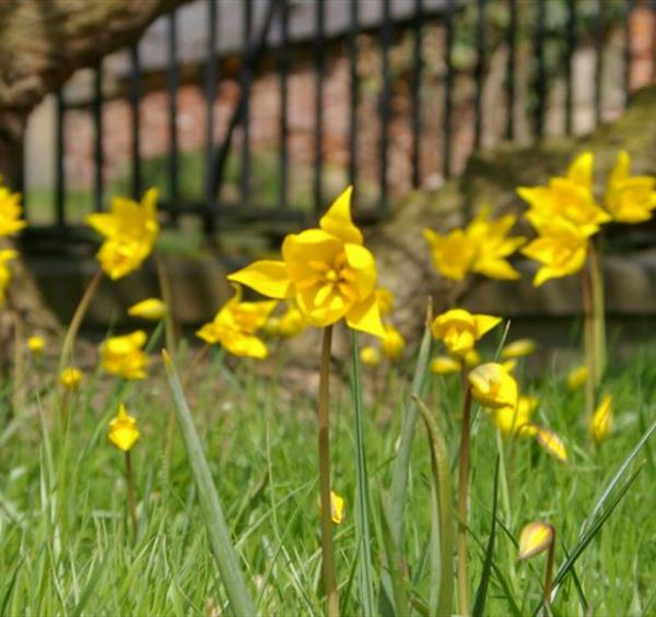 Spring Encounters in Nottinghamshire
