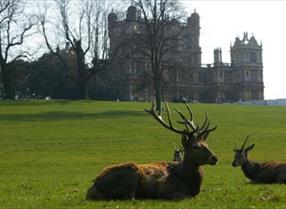 Thumbnail for Wollaton Hall