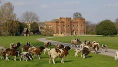 Flower Power Plant Fair at Holme Pierrepont Hall