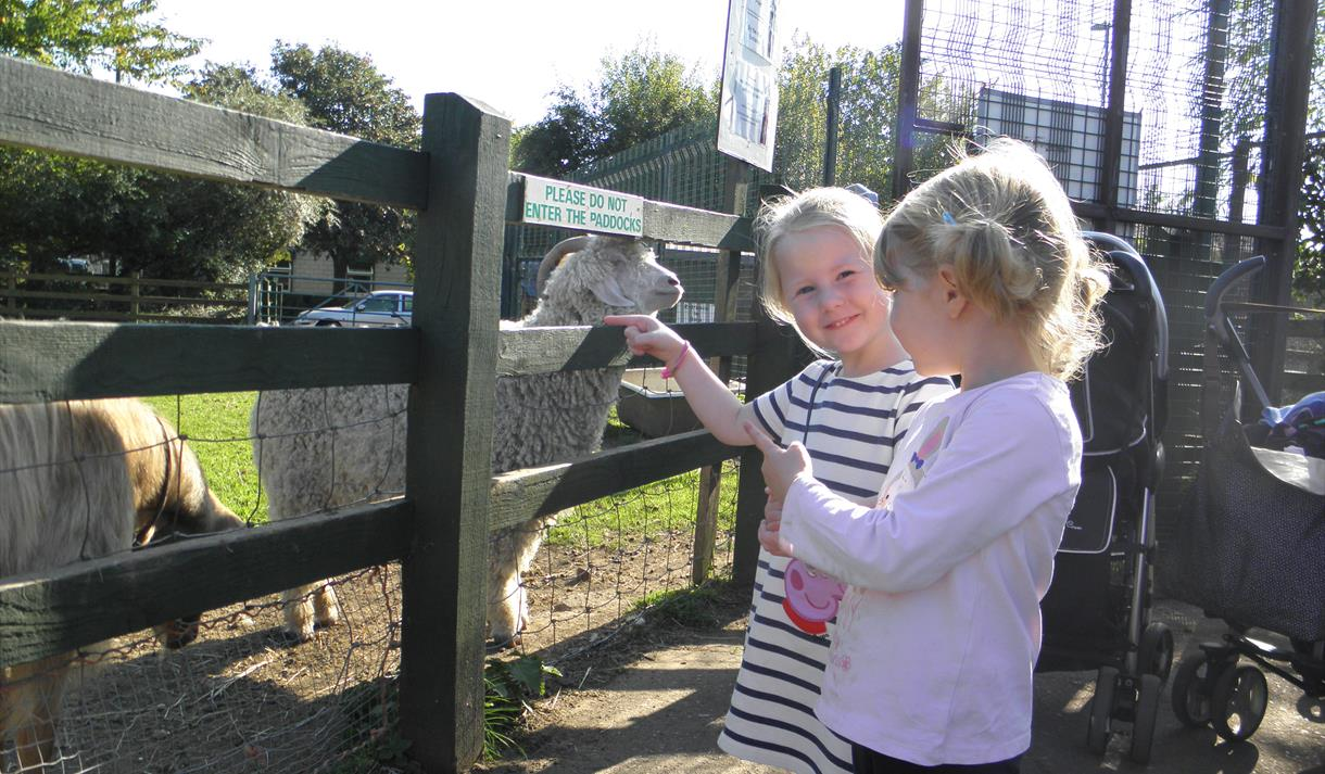 February Half Term at Stonebridge City Farm