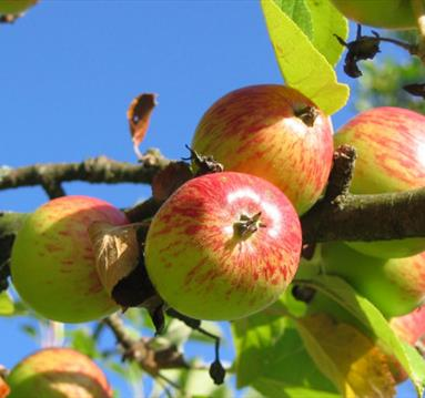 Introduction to Cider Making , The School of Artisan Food