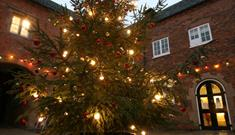 Sherwood Forest Tree Dressing & Christmas Lights Switch On