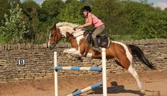 Coloured Cob Equestrian Centre
