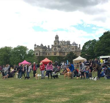 Pawsby Dog Show at Thoresby Park