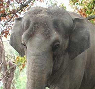 Yoga for the Elephant Sanctuary