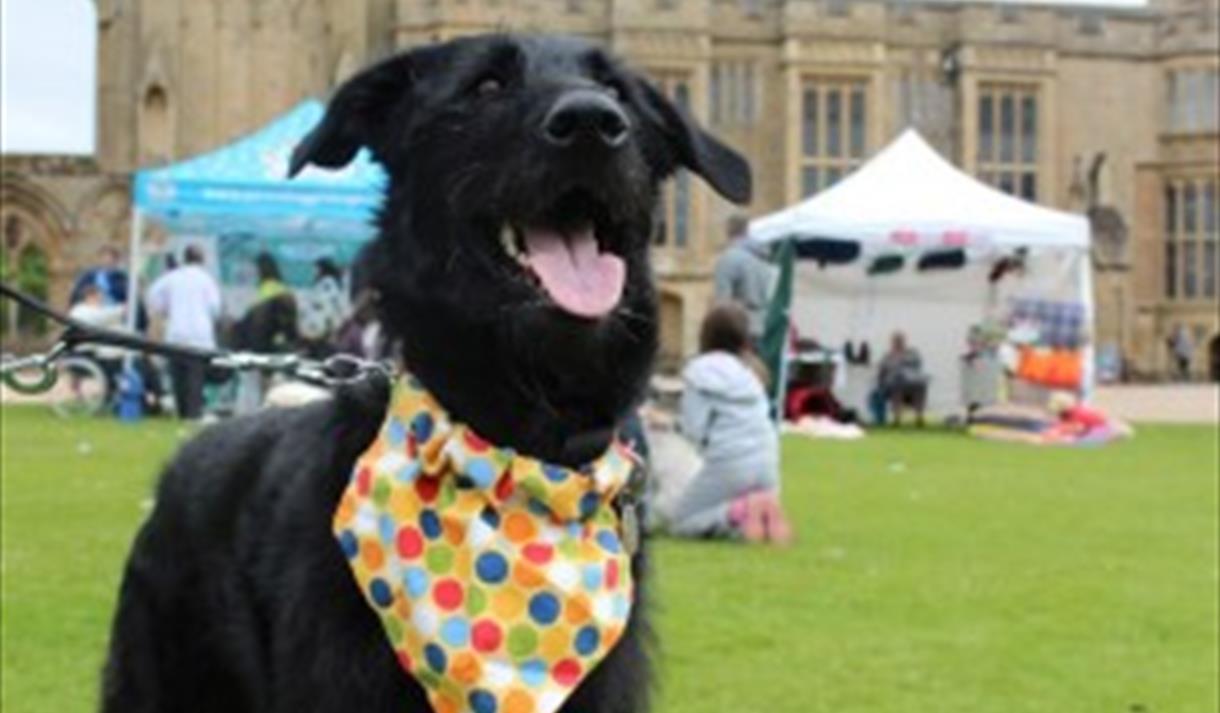 Dog Rescue Nottinghamshire England